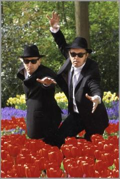 The Official Tribute To The Blues Brothers